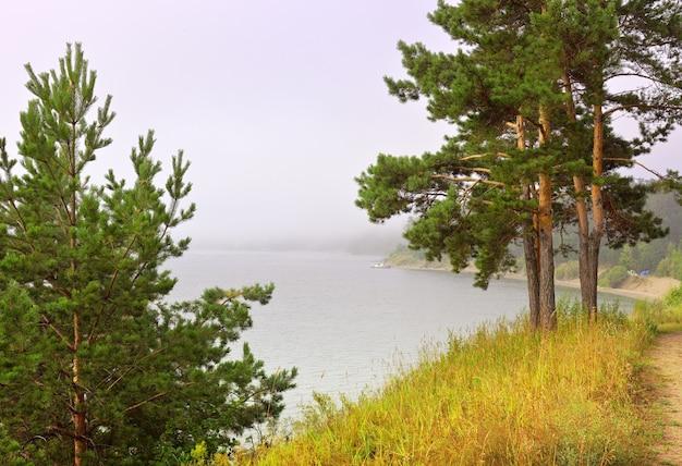 Alberi di pino sulla riva della baia di berdsky una mattinata nebbiosa sopra la superficie dell'acqua in estate