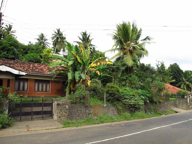La piantagione di ananas nel piccolo villaggio, sri lanka