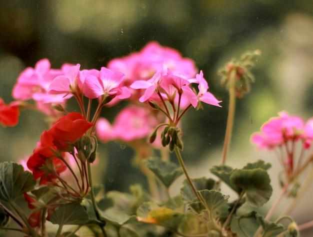 Ping fiore con sfondo foglia verde
