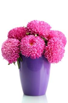 Fiori di aster rosa in vaso di fiori, isolati su bianco