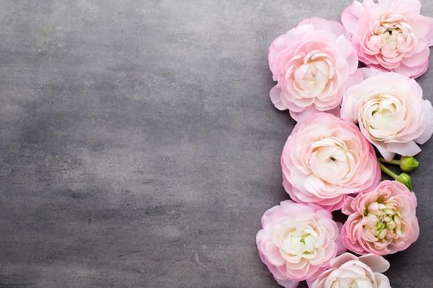 Bellissimo ranuncolo rosa su sfondo grigio