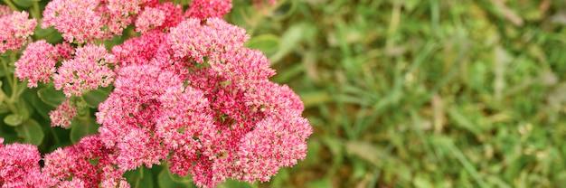 Rosa fiori che sbocciano in giardino