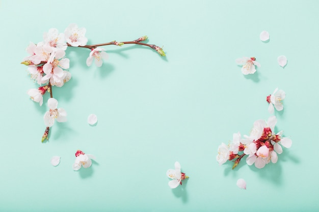 Fiori rosa della ciliegia su fondo verde