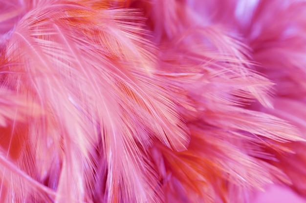 Piume di pollo rosa in stile morbido e sfocato per lo sfondo. uccello