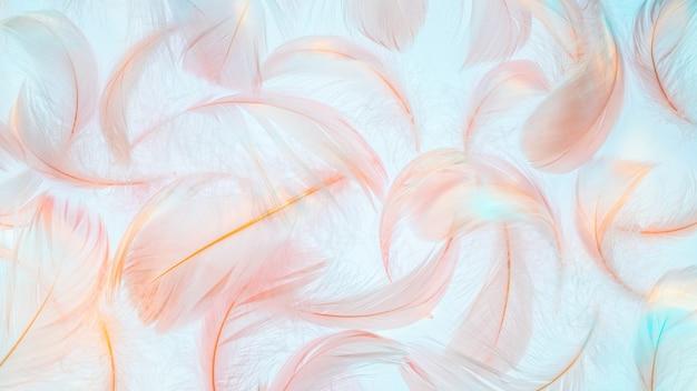 Trama di piume rosa nella luce arcobaleno su sfondo blu
