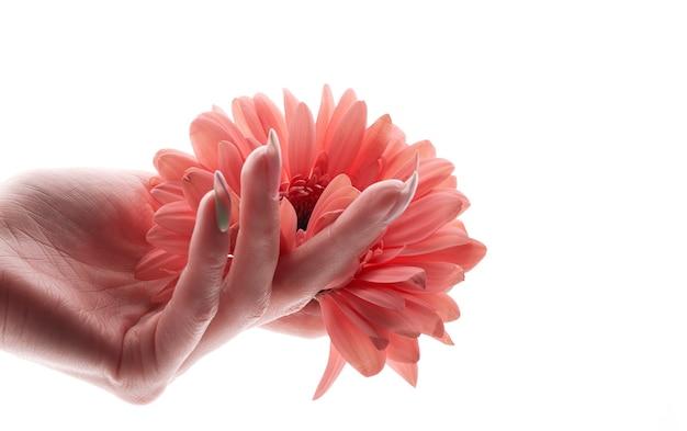 Fiore rosa in una mano femminile. simbolo della salute e della bellezza delle donne