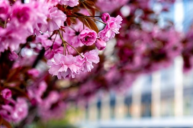 Arbusti da fiore rosa in un giardino di primavera con bokeh