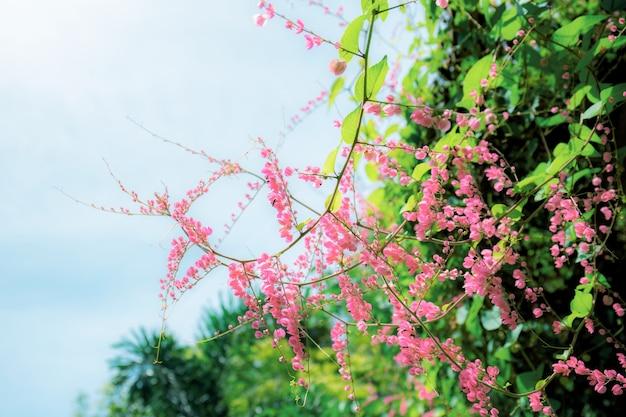 Fiori rosa che sbocciano sul cielo blu chiaro