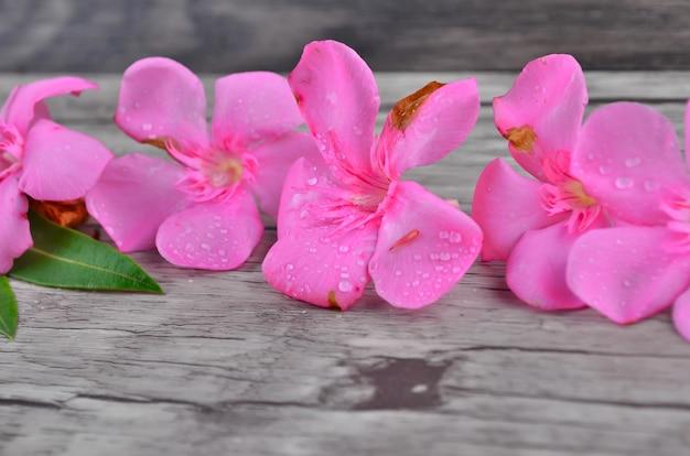 Bordo di fiori rosa su motivo in legno