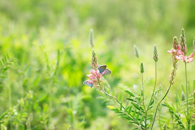 Fiori rosa su sfondo verde con farfalle blu