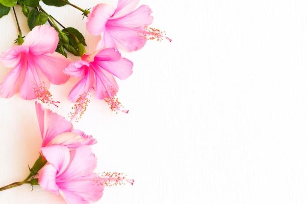 Fiori rosa disposizione ibisco piatto stile cartolina laici