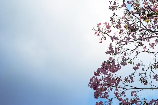 Fiori rosa e cielo