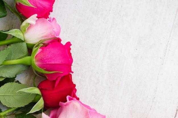 I boccioli di rose fresche rosa si chiudono sul confine su bianco