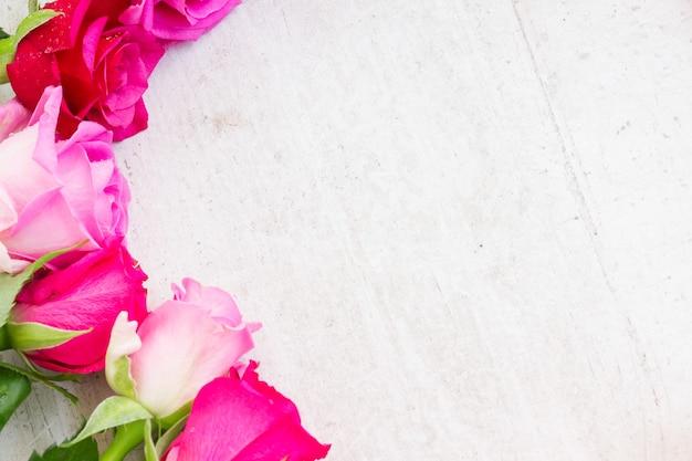 Le rose fresche rosa si chiudono sul bordo su bianco