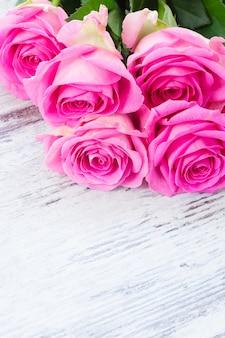 Rose rosa fresche in gocce d'acqua si chiudono su bianco