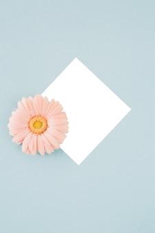 Fiore rosa della gerbera nel telaio sul blu