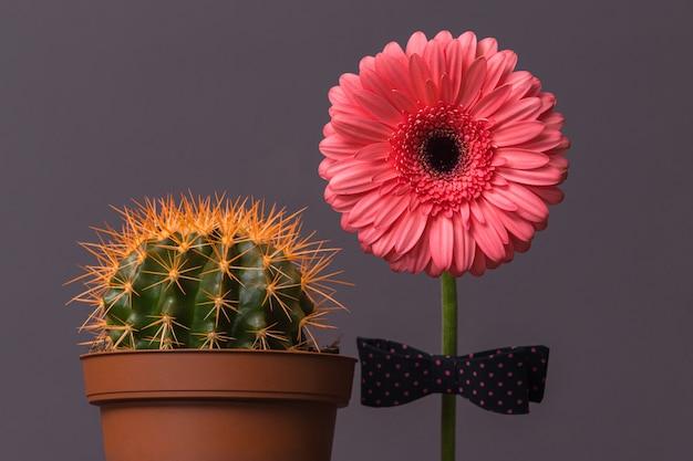 Fiore di gerbera rosa con un papillon sullo stelo accanto a un cactus in un vaso marrone