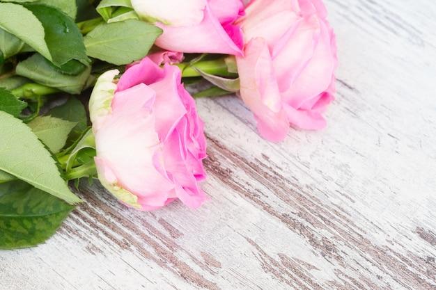 Rose fresche di luce rosa in gocce d'acqua su bianco