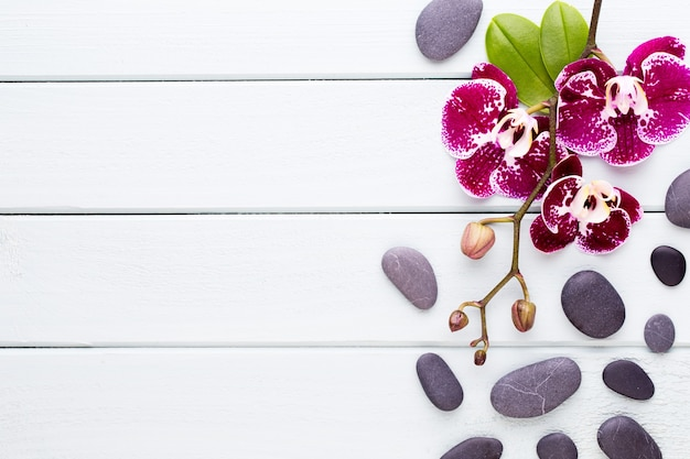 Orchidea rosa su legno. spa e wellnes flat lay.