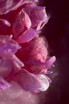 Fine rosa del fiore della peonia su
