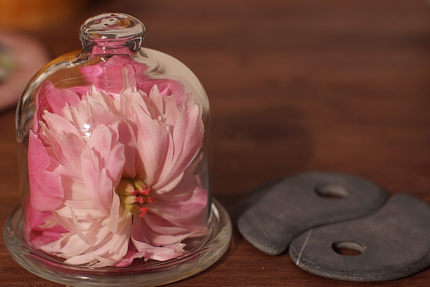 Un fiore di peonia rosa ricoperto da una copertura di vetro accanto alle pietre yin-yang