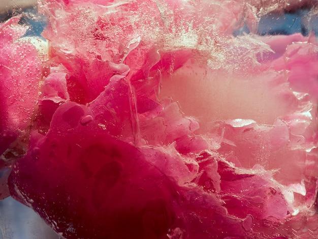 Fiore rosa peonia in cubetto di ghiaccio con bolle d'aria. Foto Premium