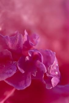 Fiore rosa peonia in cubetto di ghiaccio con bolle d'aria.