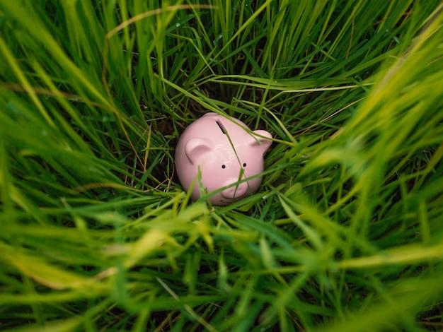Salvadanaio di maialino rosa nascosto nel retro delle piantine di riso trova il tuo modo di risparmiare per la pensione