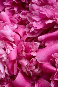Pione rosa fiori che sbocciano brunch in giardino con copia spazio in stile minimal, modello per scritte, testo o il tuo disegno