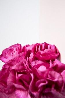 Garofani rosa viola su sfondo bianco lilla. fiori rosa. posto per il testo. festa della mamma. biglietto d'auguri. giorno del matrimonio. san valentino