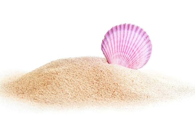 Rosa viola conchiglia di mare nel mucchio di sabbia isolato su bianco