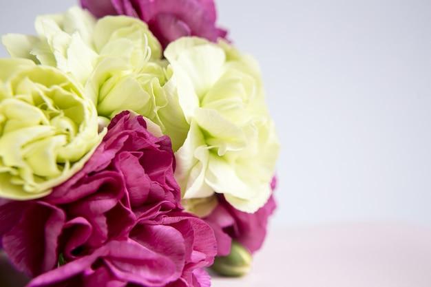 Garofani rosa viola e gialli verdi su sfondo bianco lilla. fiori rosa. posto per il testo. festa della mamma. biglietto d'auguri. giorno del matrimonio. san valentino.