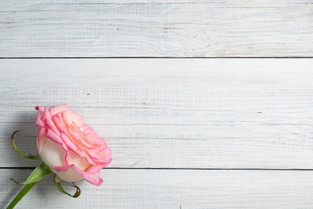 Rosa rosa su sfondo vintage in legno bianco.