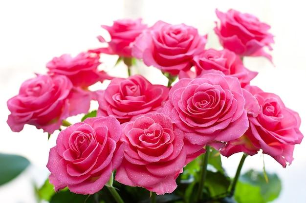 Rosa rosa con goccioline d'acqua su uno sfondo bianco