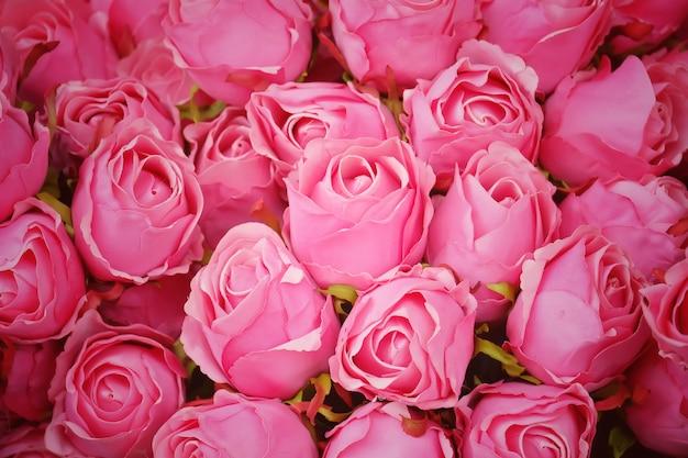 Le rose rosa fioriscono per fondo.