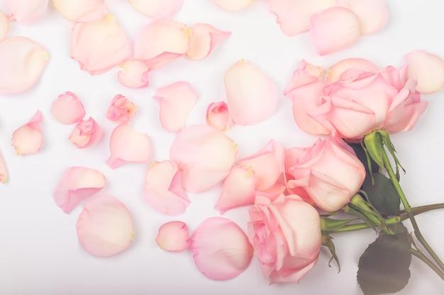 Rose rosa su uno sfondo chiaro delicato