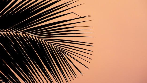 Tramonto rosa alla spiaggia di tamil nadu