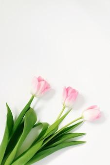 Tulipani rosa su sfondo bianco. compleanno