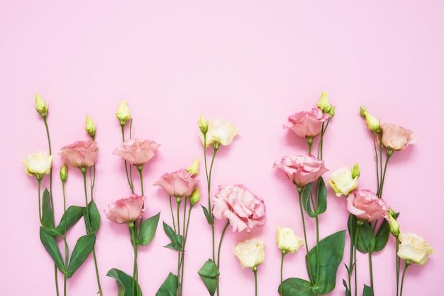Fiori di eustoma rosa e bianchi su sfondo rosa. copia spazio, vista dall'alto. sfondo vacanza.