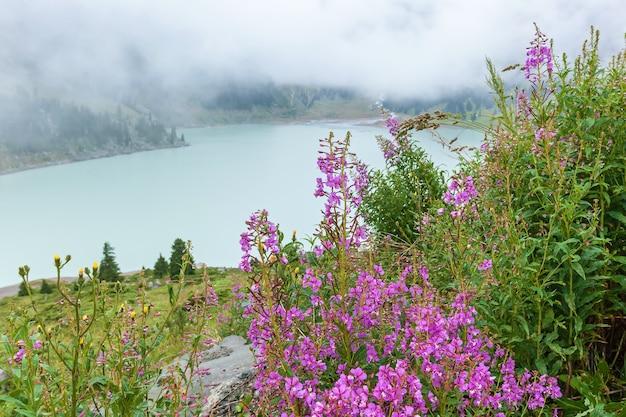 Fiori di campo rosa con gocce di pioggia sullo sfondo del grande lago di almaty
