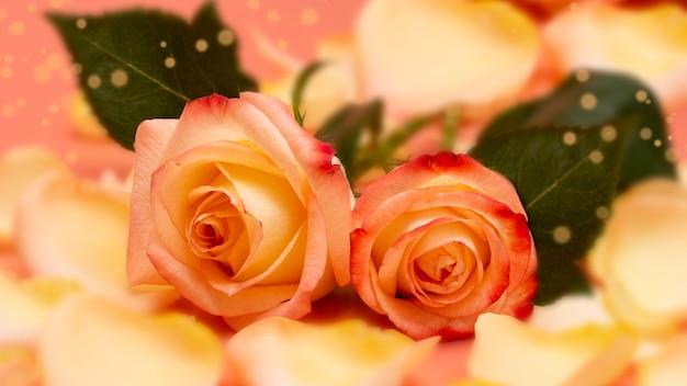 Rose aperte rosa-gialle con gocce d'acqua e petali su uno sfondo rosa da vicino Foto Premium