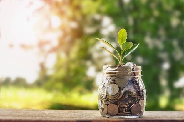 Pianta che cresce sul barattolo di vetro delle monete e sulle monete di risparmio dei soldi di concetto