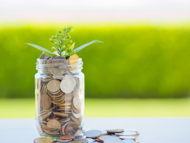 Pianti la crescita dalle monete in barattolo di vetro per il concetto di risparmio dei soldi