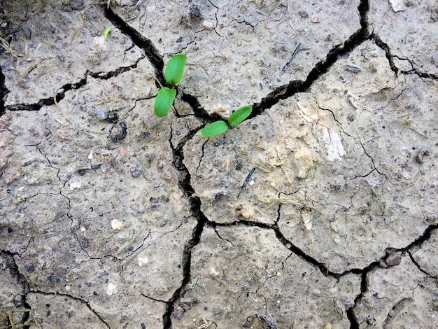 Pianta che cresce attraverso fessure secche nel terreno