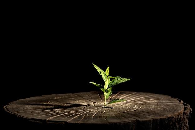 Pianta che cresce in un ceppo di albero