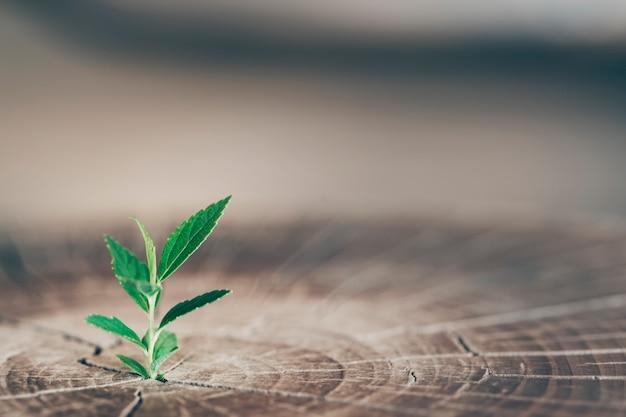 La pianta cresce nel bosco
