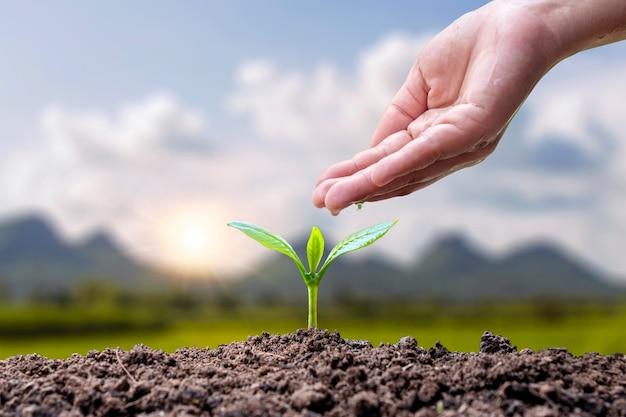 Crescita delle piante o germinazione dei semi e mani che innaffiano le piante su sfondo verde sfocato della natura.