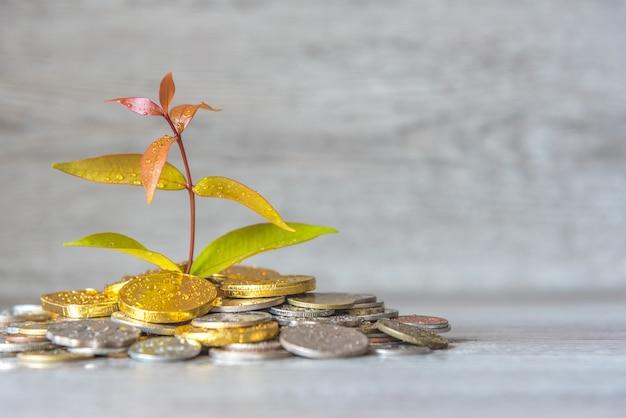 La pianta sta crescendo dal risparmio delle monete dei soldi - concetto del risparmio e di investimento e di risparmio.