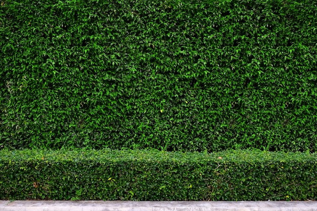 Fondo della parete del recinto della pianta della pianta