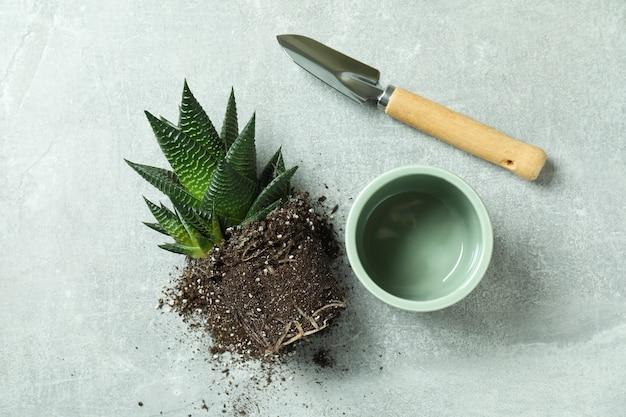 Pianta, vaso e pala da giardino sul tavolo grigio testurizzato